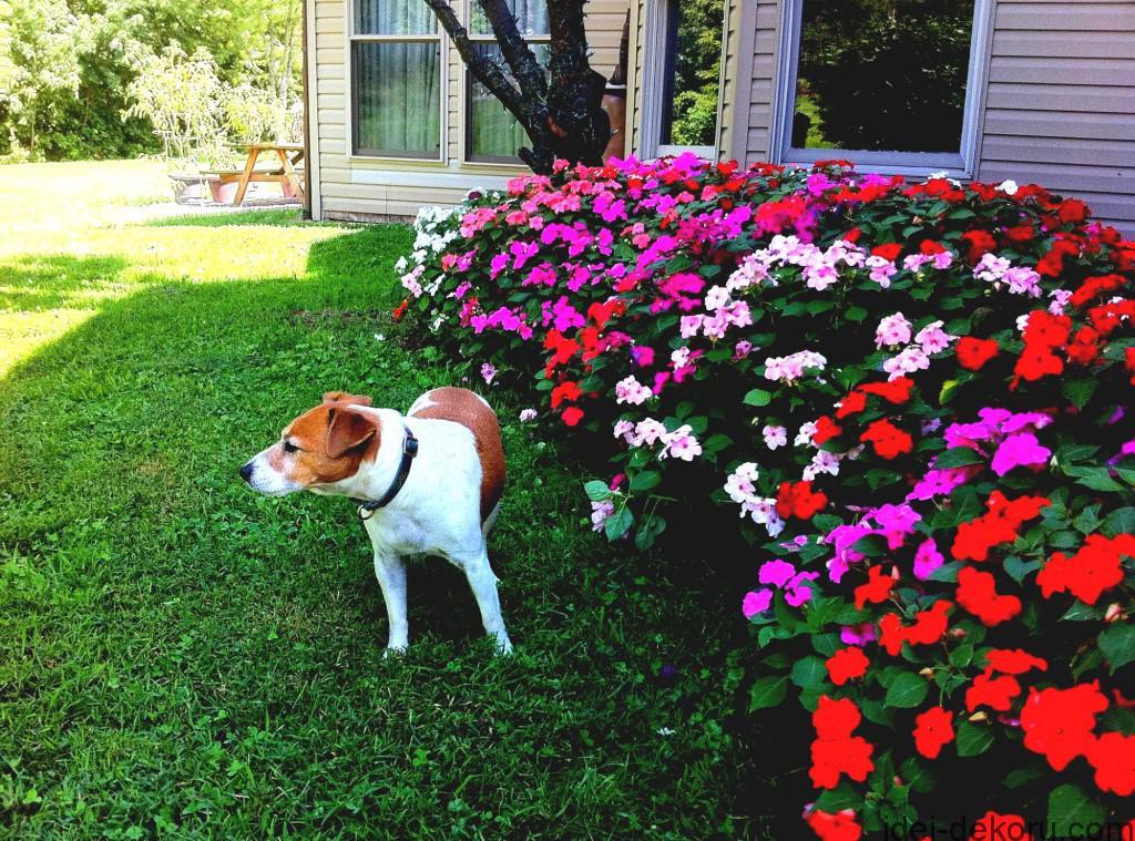 Flower-Gardens-Ideas-Home-Decorating-Ideas-And-Tips-GoodHomez-com-home-flower-garden-tips--1024x759