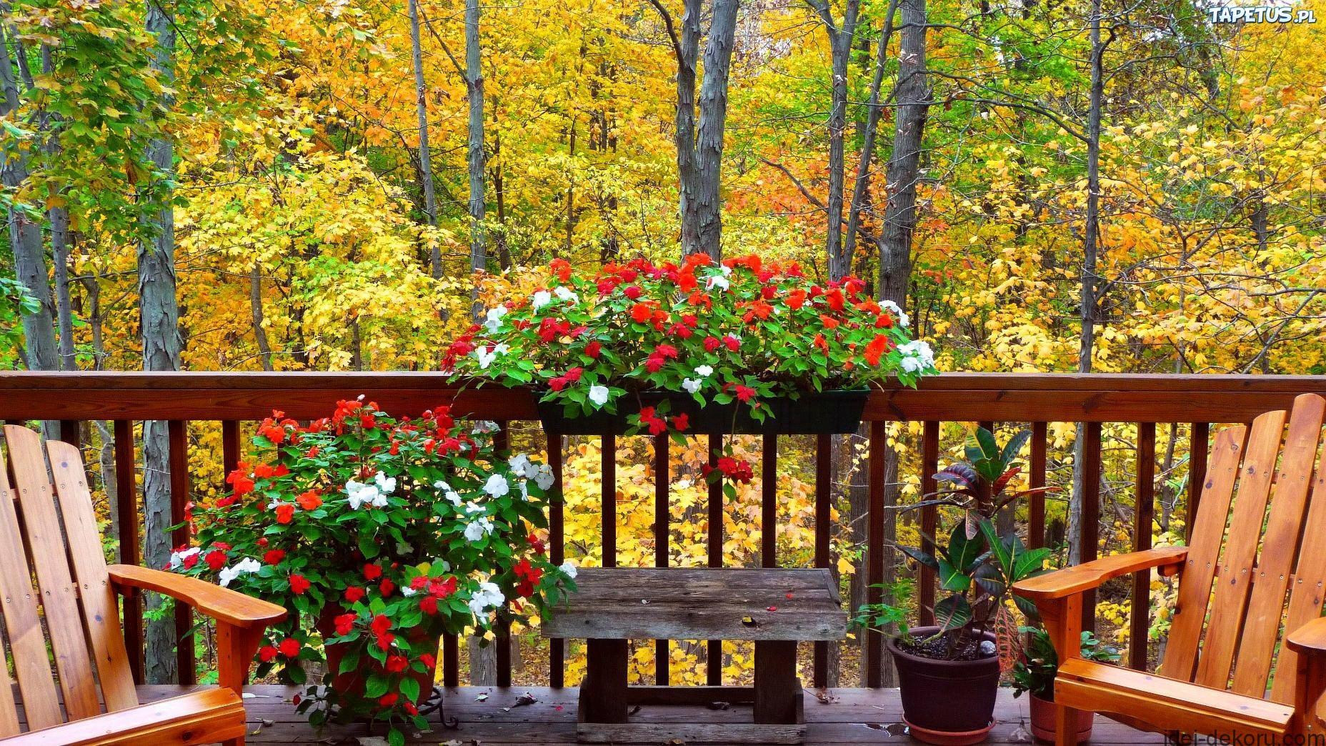 155223_jesien-las-balkon-kwiaty