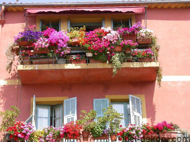 cvety-na-balkone