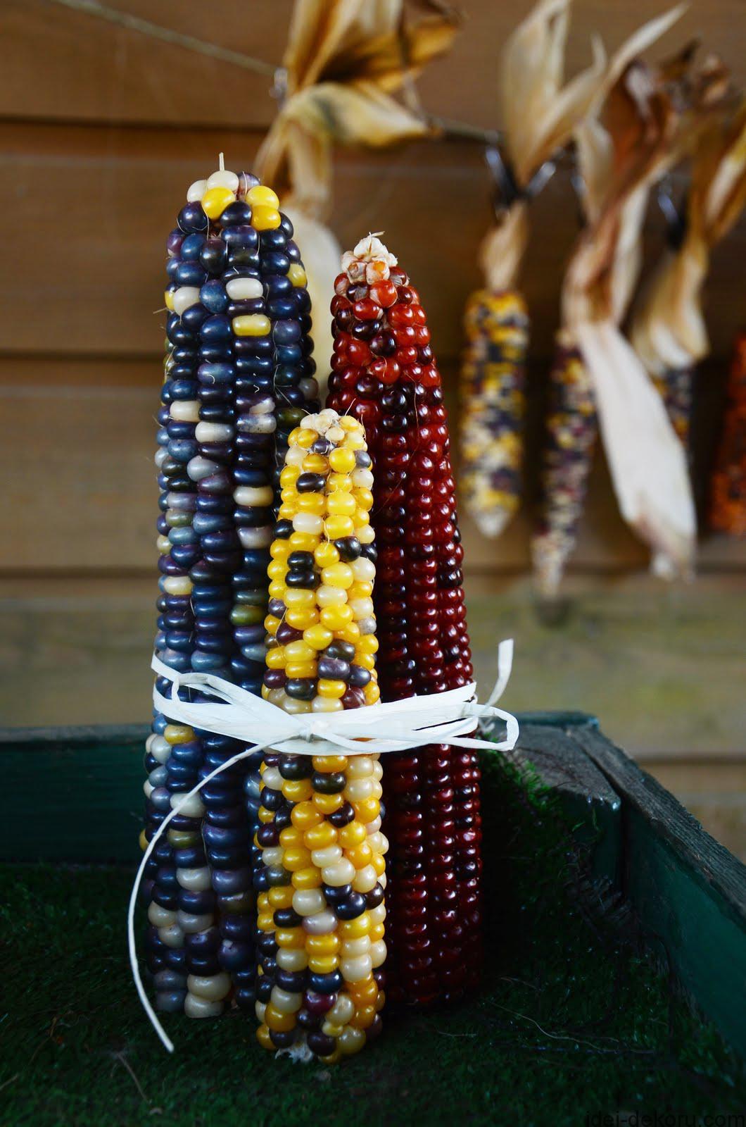 10-corn-in-front-of-corn