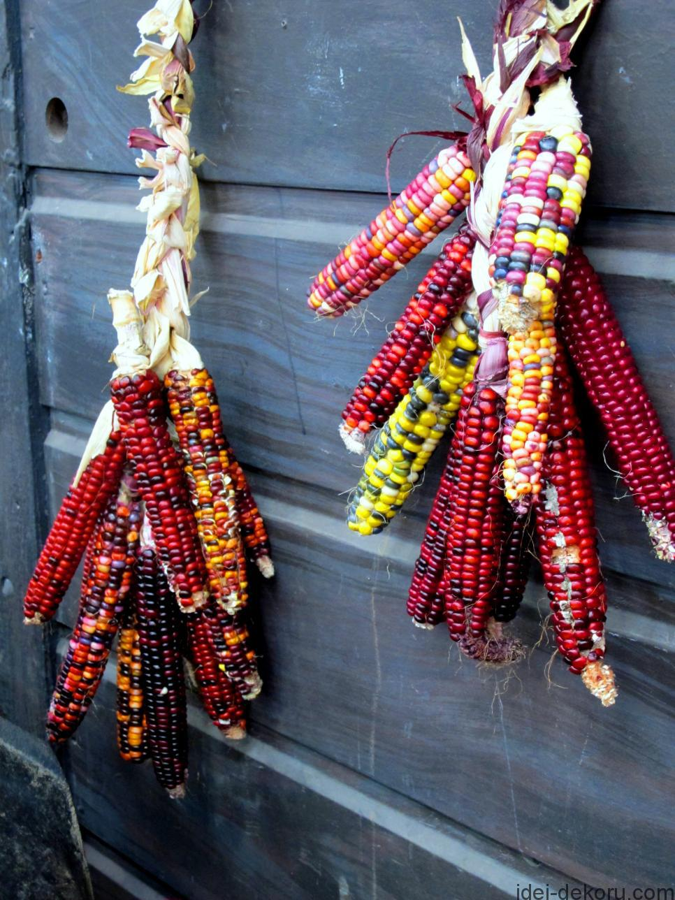 original_indian-corn-jpg-rend-hgtvcom-966-1288