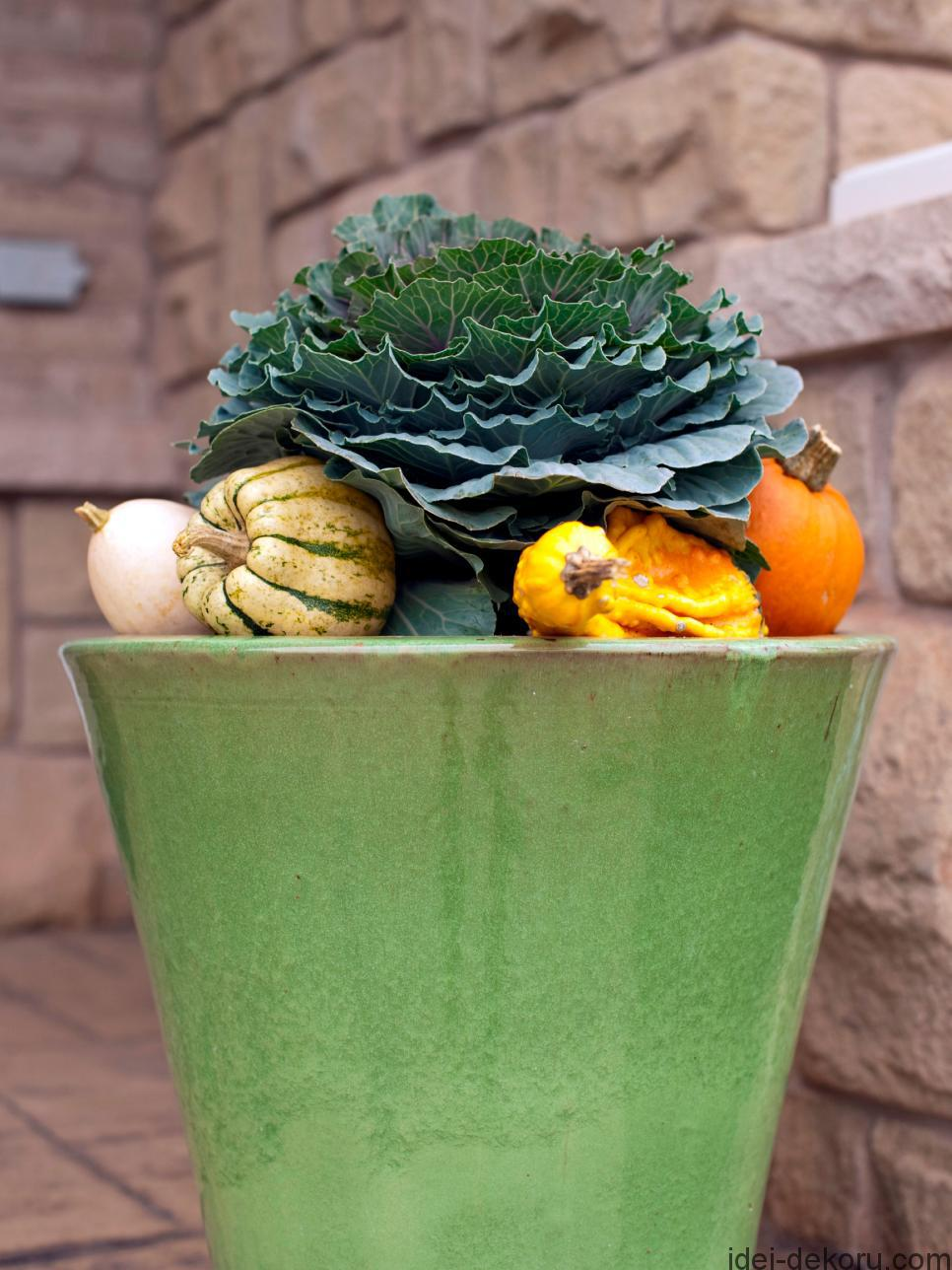 istock-010834232_fall-cabbage-gourds_s3x4-jpg-rend-hgtvcom-966-1288