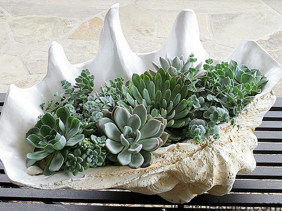 succulents-planted-in-a-seashell