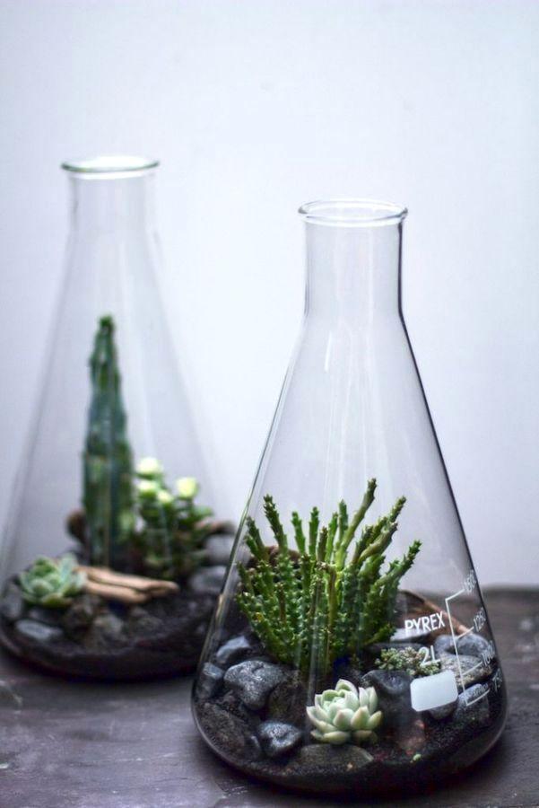 флорариум-в-колбе