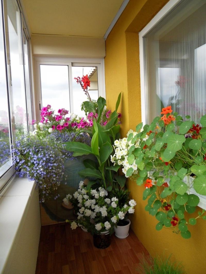 Oranzhereja-na-balkone-02