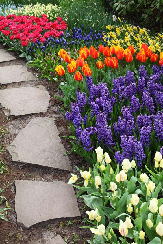 beautiful-tulips-next-to-stone-path-garden-idea