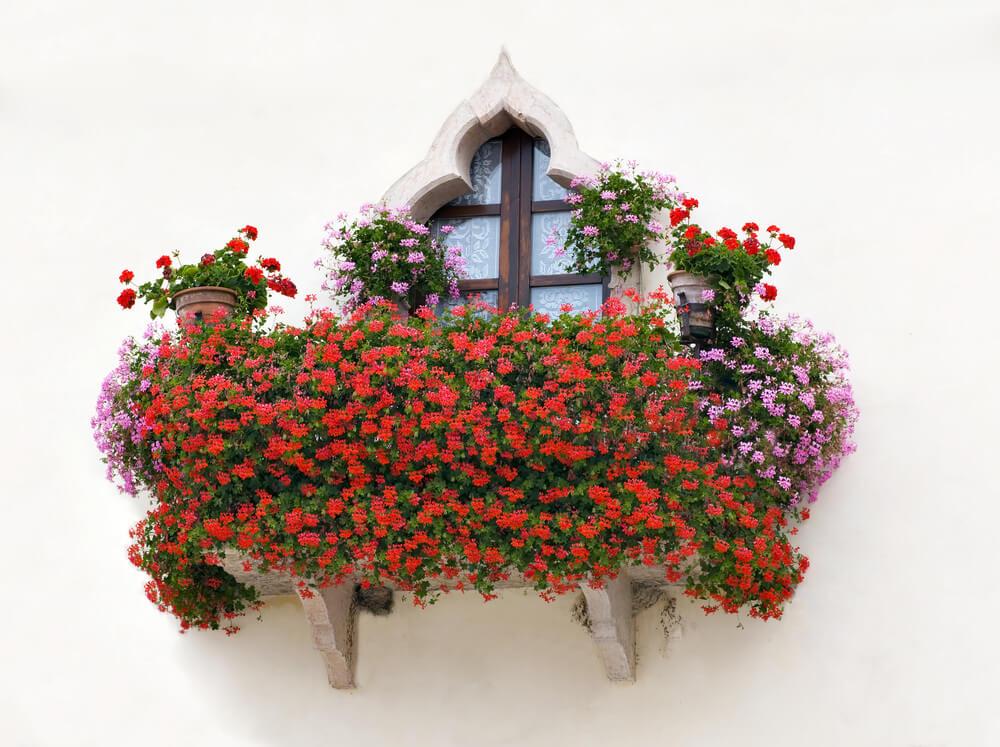 10window-flower-box