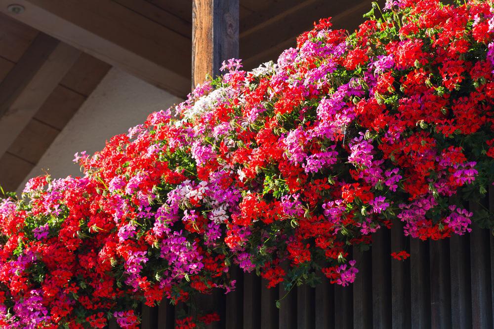 16window-flower-box