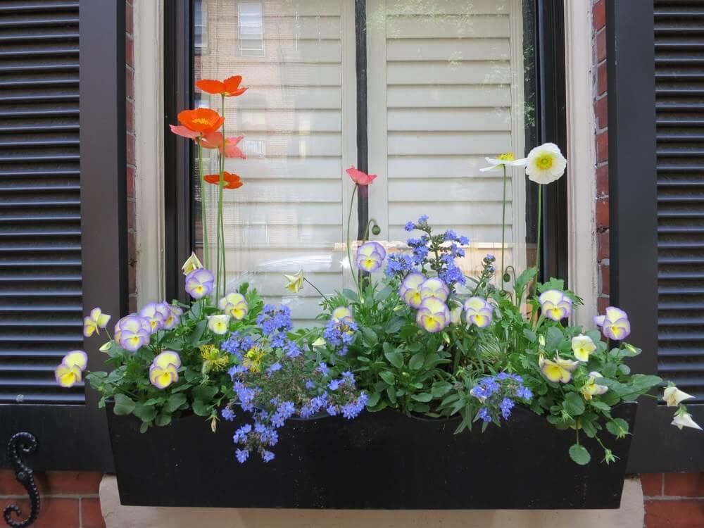 17window-flower-box