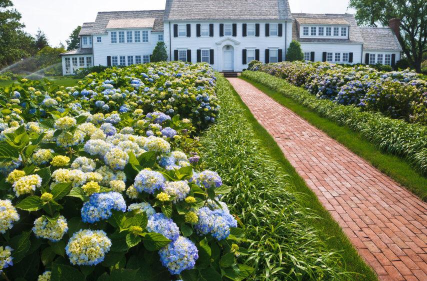 1hydrangea-garden