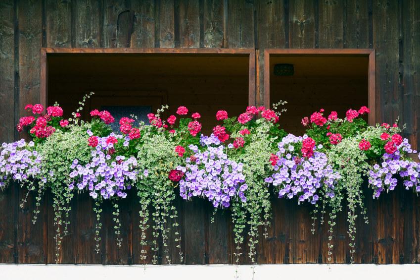 1window-flower-box