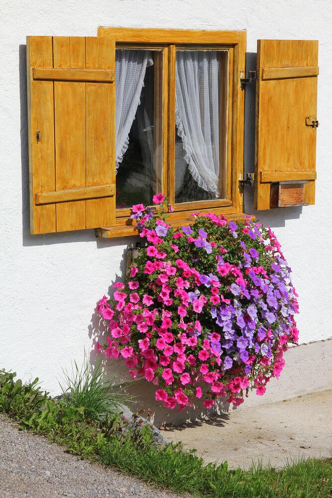 20window-flower-box