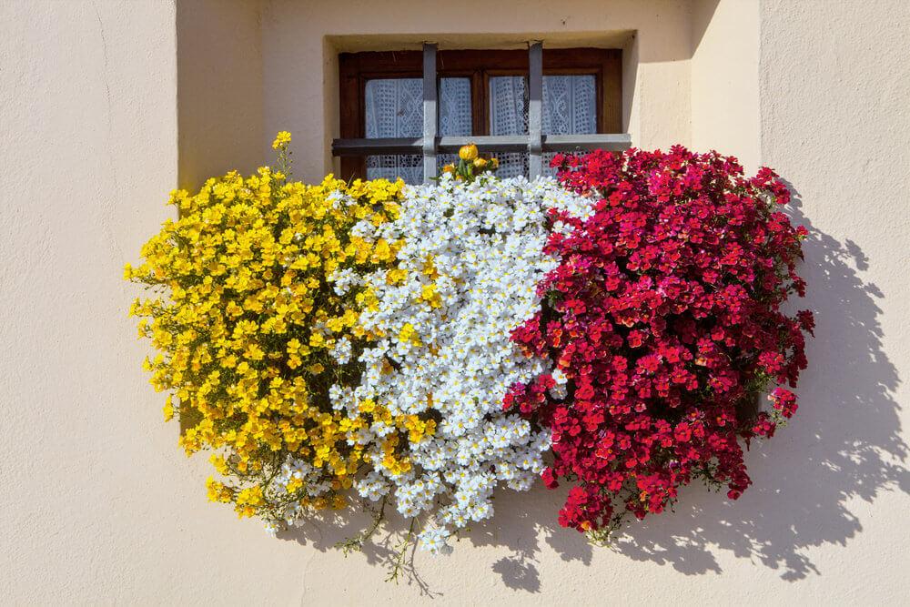 28window-flower-box