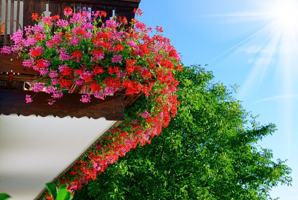 29window-flower-box