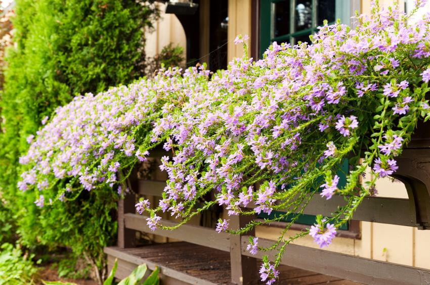 2window-flower-box