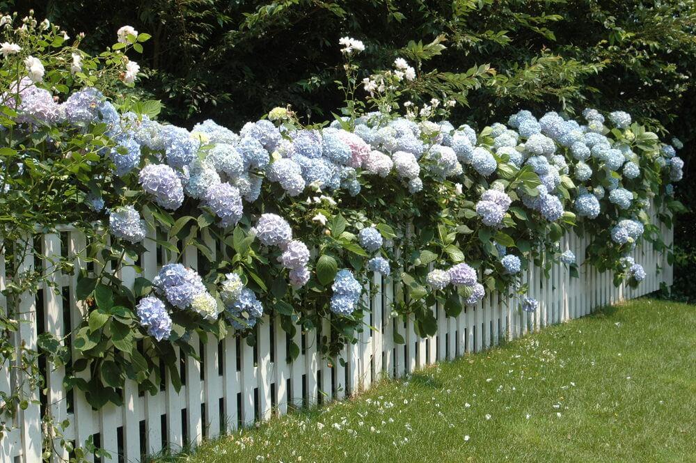 6hydrangea-garden