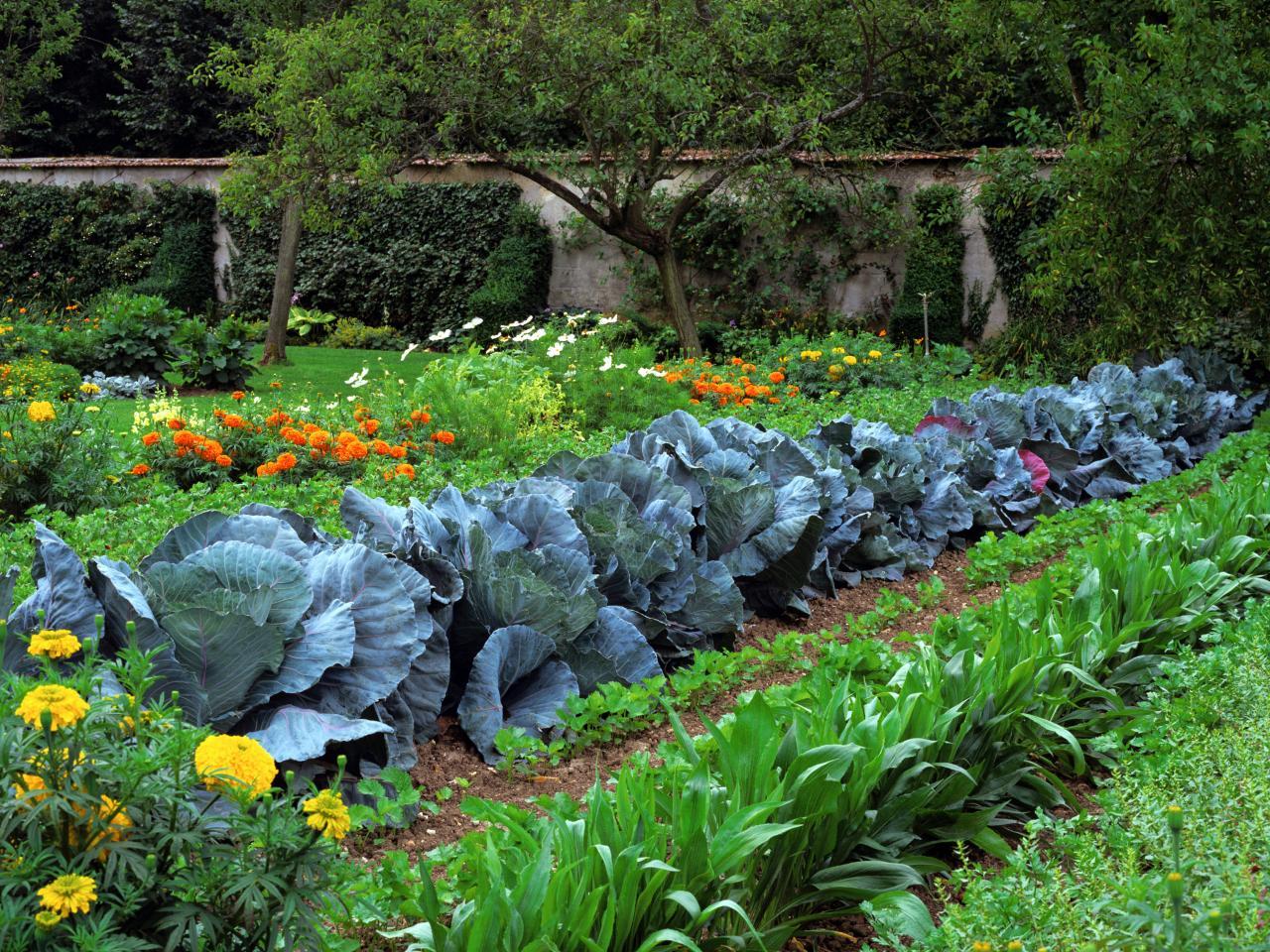 RX-DK-CGG03704_rows-of-vegetables_s4x3.jpg.rend.hgtvcom.1280.960