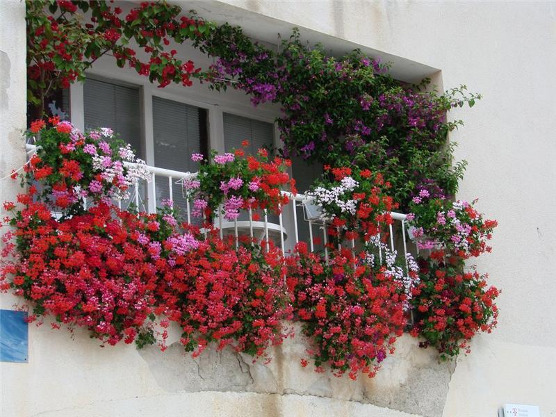dlya-balkona-cvety