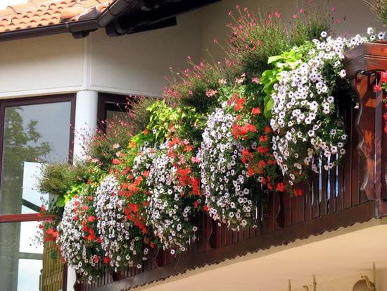 rebec-cvetka-balkon-v