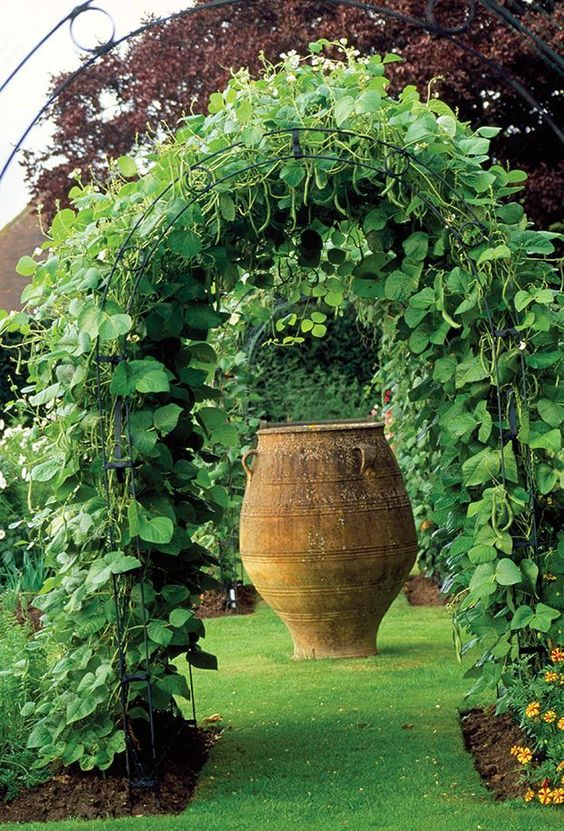 Runner Beans trained over metal arbor leading to focal point of large classic earthenware jar. Town Place, Freshfield.
