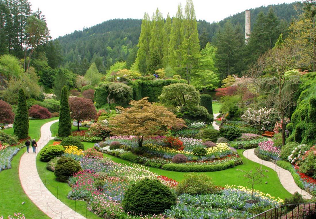 landscape_design_shrubs_01