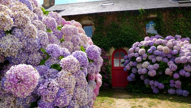 hydrangeas-outdoor-home-decorating-with-flowers-yard-landscaping-ideas-3