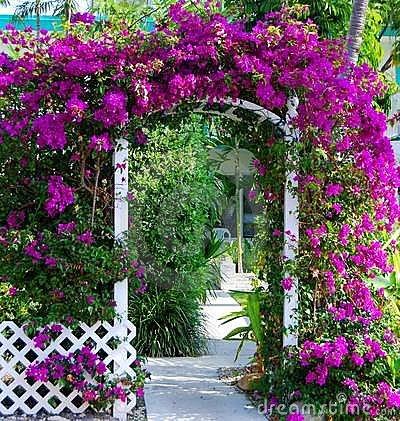 southern-garden-gate-bouganvillea-5072529
