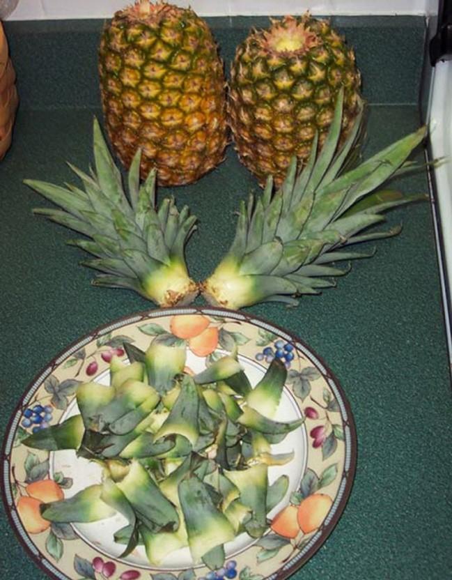 1364045027_kak-vyrastit-ananas-etap2