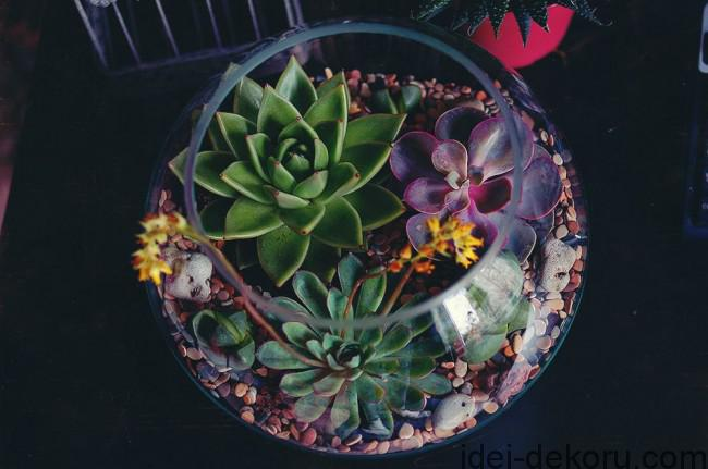 Florarium_014-650x431