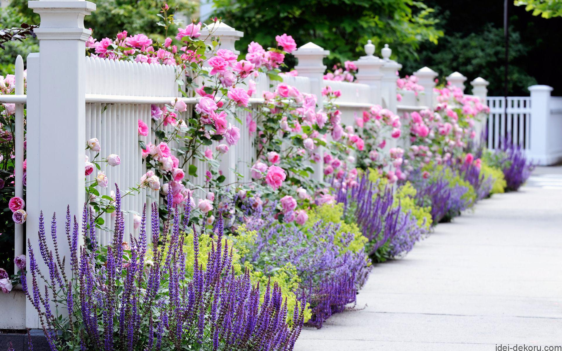 flower_garden_pictures_hd_dg8