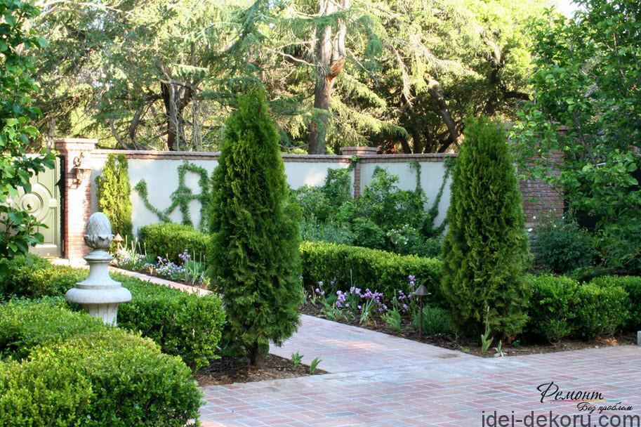 Хвойні рослини в ландшафтному дизайні Ідеї декору