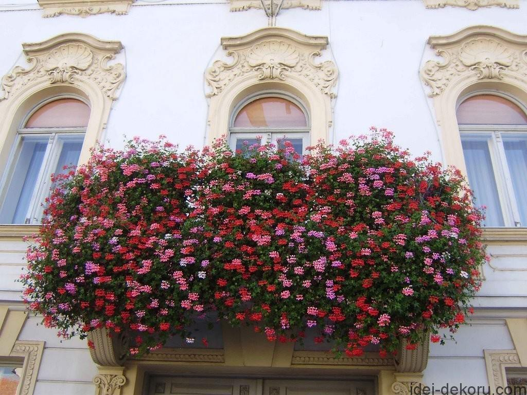 balkon-cvetu