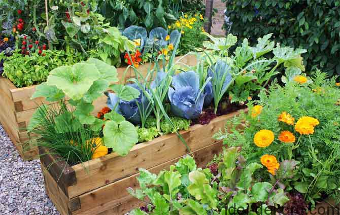 vegetable-bed-5