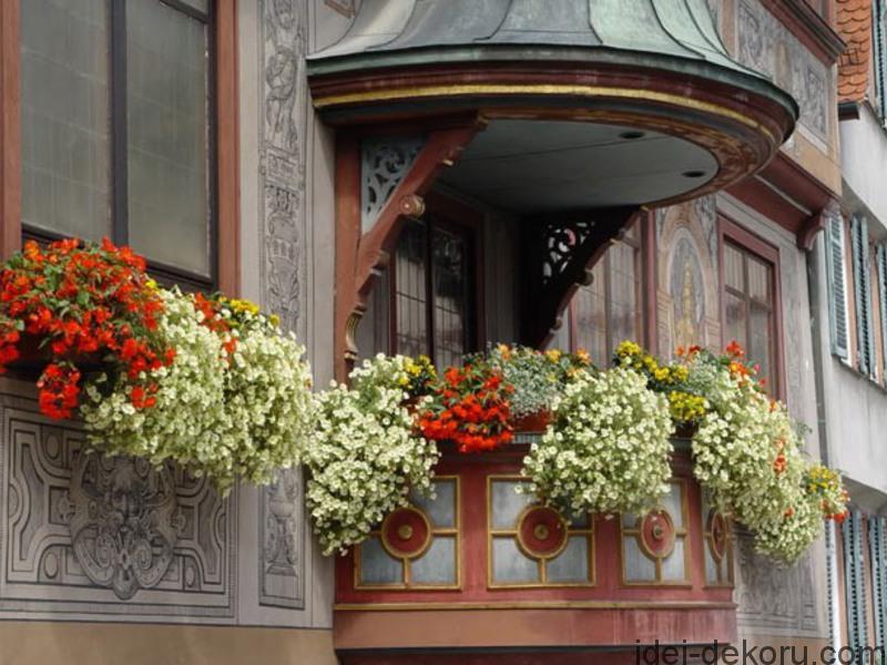 kitaiskii-limonnik-na-balkone