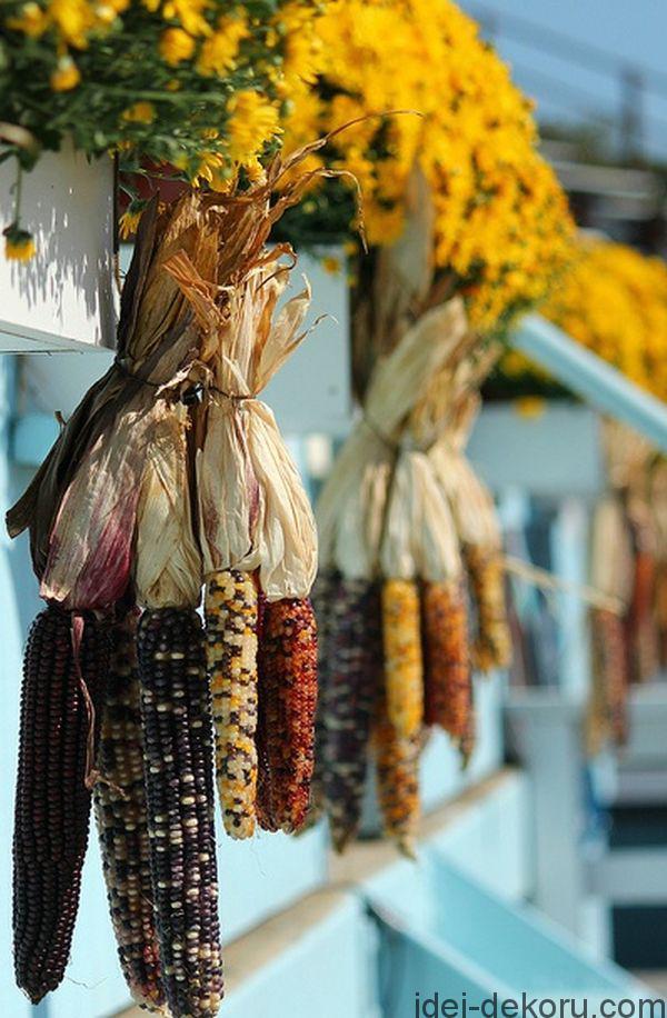 hanging-corn