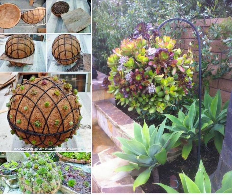 succulent-ball-f1
