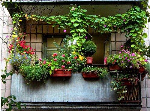 1334998136_kak-ozelenit-balkon-2