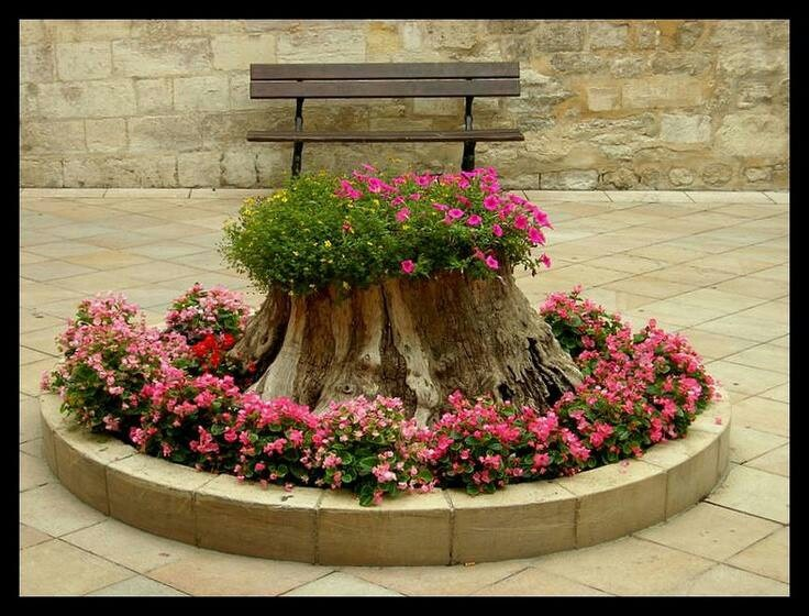Цветы-на-пнях