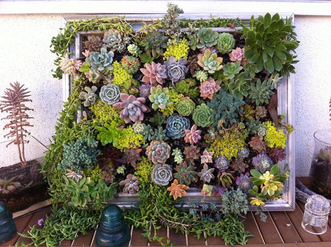 10-Succulent