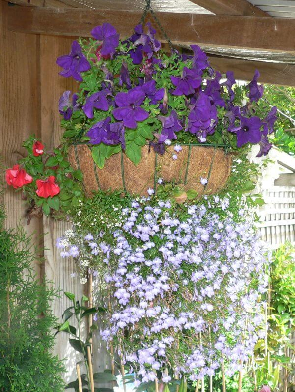 10hanging-basket-flowers