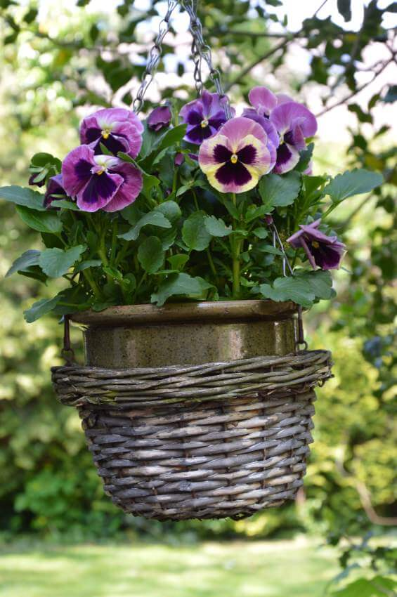 12hanging-basket-flowers