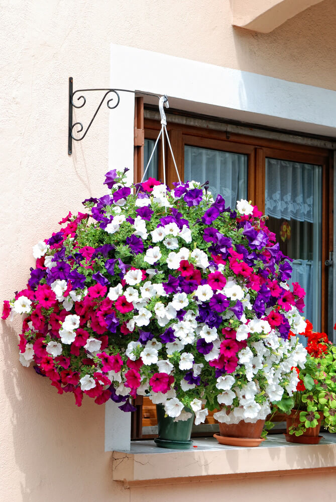 15hanging-basket-flowers
