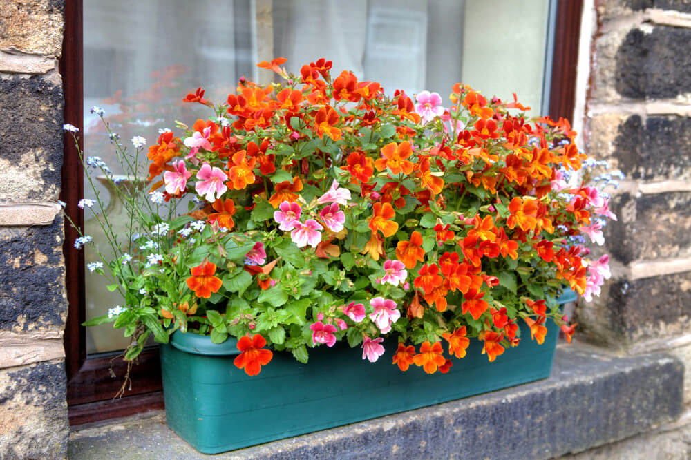 15window-flower-box