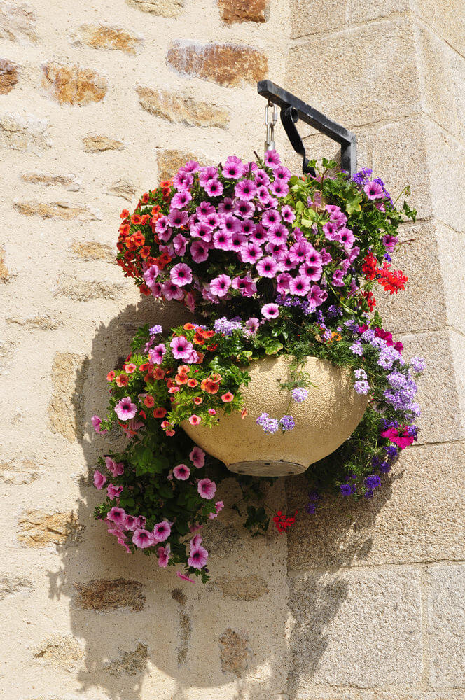 16hanging-basket-flowers