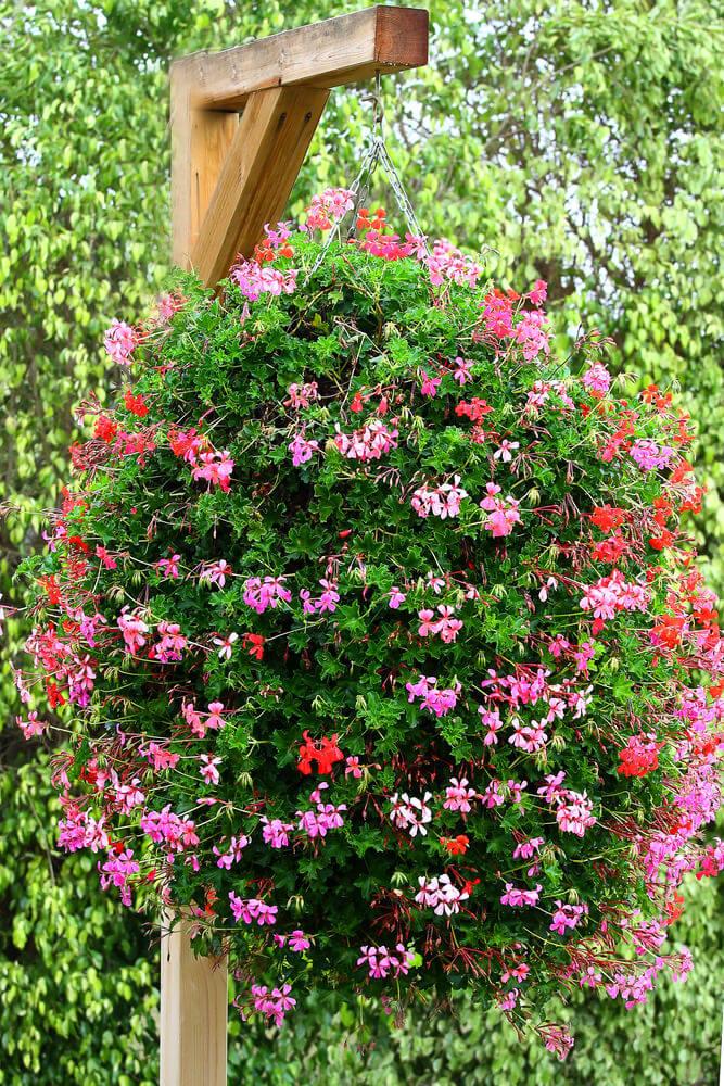 17hanging-basket-flowers