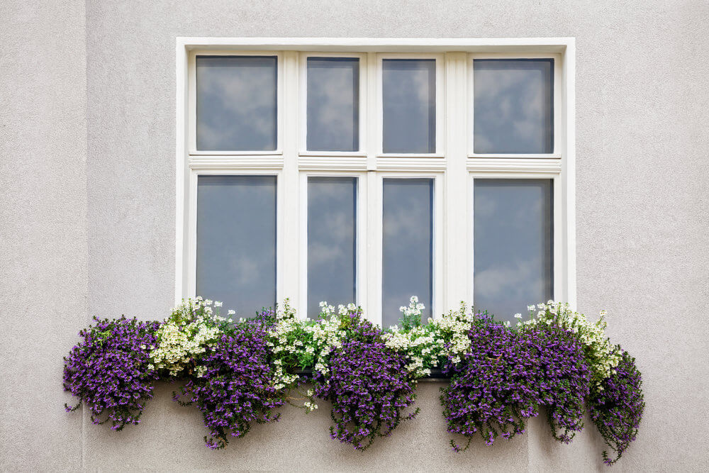 19window-flower-box