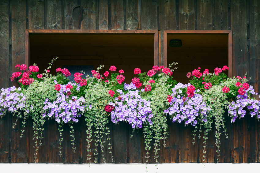 1window-flower-box