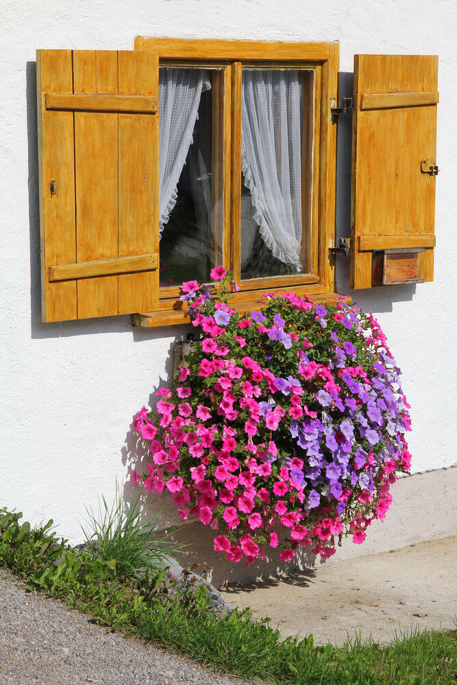 20window-flower-box