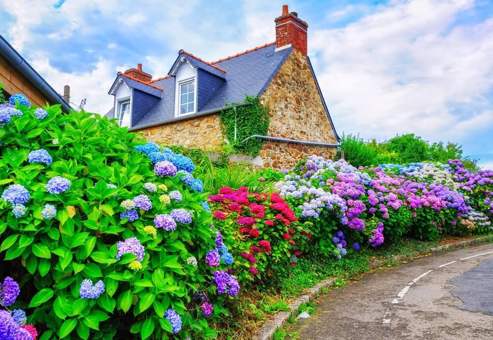 23hydrangea-garden
