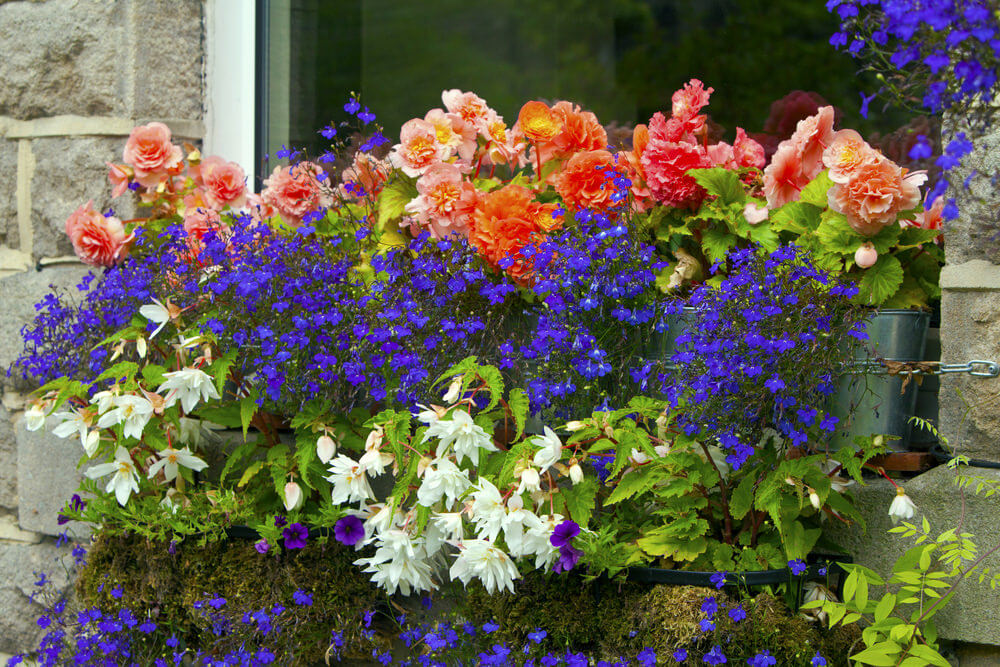 23window-flower-box